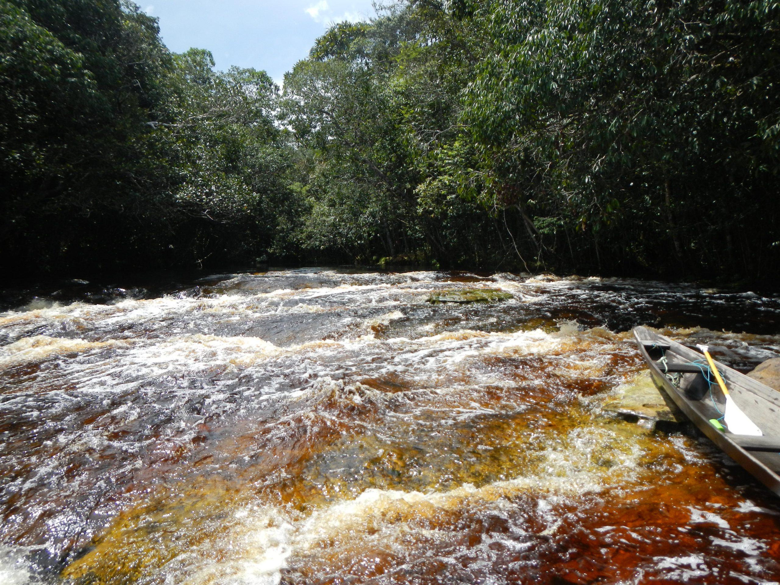 A Trilha do Bariaú acompanha o rio de mesmo nome, considerado um dos mais bonitos do Parque por suas belas corredeiras, que ficam cobertas durante parte da estação da cheia. Corredeiras do Bariaú. Foto: Priscila Santos